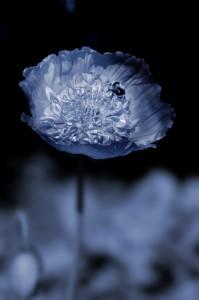 flower3 199x300 Advanced Photoshop Techniques